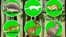 Collect all the animal cards in Perfect Earth Animals