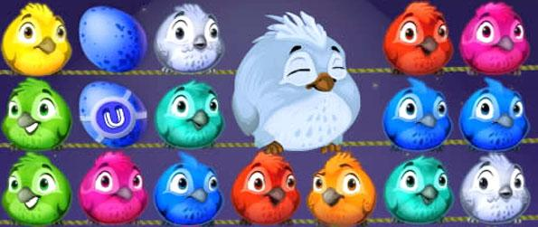 Fluffy Birds Flash - Enjoy a fun fast paced match 3 game with a difference.