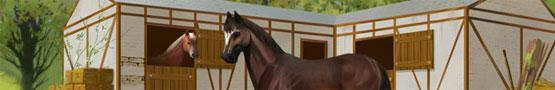 Pferde Spiele Online - Three Horse Breeds Recommended for Beginners