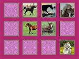 Horse – Pet Memory Game memory based mini-game