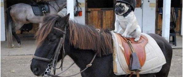 Hi Hi Horse - Enjoy Horse pictures and memes in this fun site.