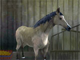 Offroad Horse Racing 3D picking a horse