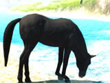 The Horse quenching thirst