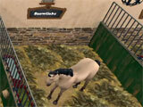 Choosing a horse in the game