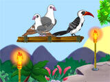 Bird Land Paradise beautiful birds