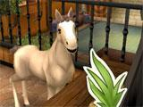 Feeding your foal in Horse Haven: World Adventures