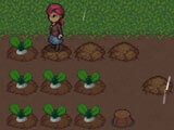 Fantasy Farming: Orange Season: Harvesting radishes
