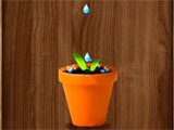 Giving water to the plant