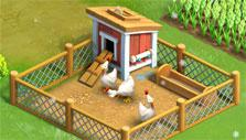 Chickens in Funky Bay
