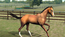 Exercise in My Horse