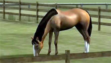 Gameplay for My Horse
