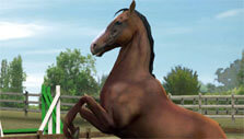 Rearing Horse in My Horse