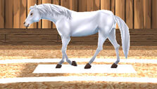 My Riding Stables: Your Horse Breeding: Training foals